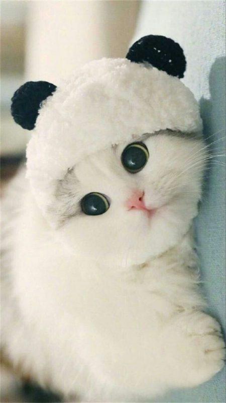 خرید بچه گربه